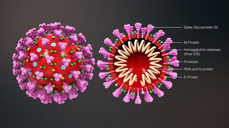 ویروس کرونا چگونه اثر میکند